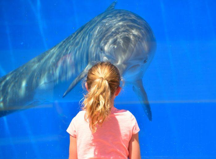 水槽の中のイルカをみる少女