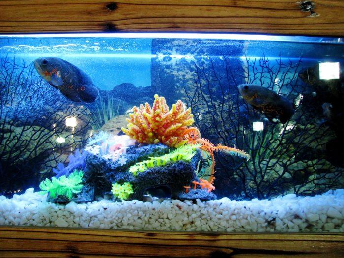 美しいアクアリウムと魚たち