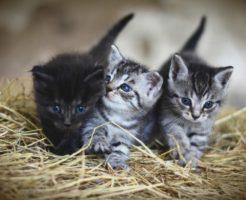 猫の多頭飼いに適したキャリーバック